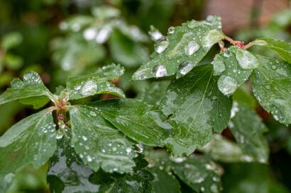 020 Herbstregen-103