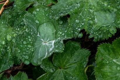 022 Herbstregen-197
