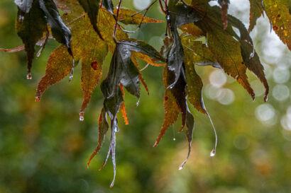 028 Herbstregen-232