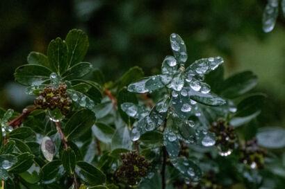 032 Herbstregen-248