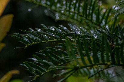 033 Herbstregen-252