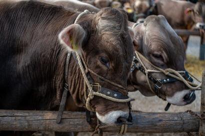 Stierenmarkt 2019-191-UHD