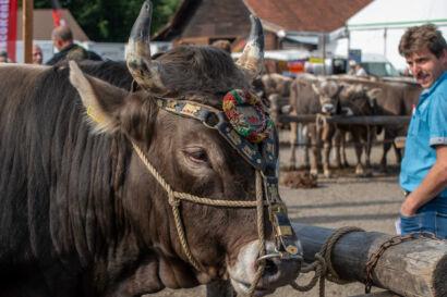 Stierenmarkt 2019-209-UHD