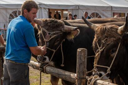 Stierenmarkt 2019-220-UHD