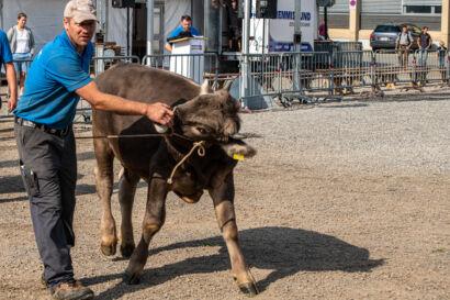 Stierenmarkt 2019-273-UHD