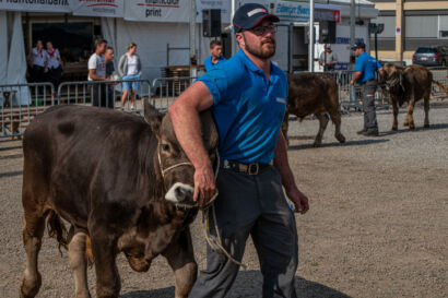 Stierenmarkt 2019-276-UHD