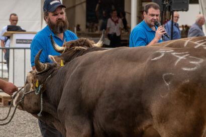 Stierenmarkt 2019-327-UHD