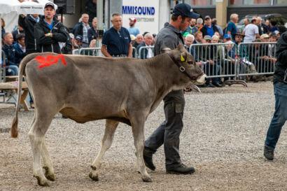 Stierenmarkt 2019-523-UHD