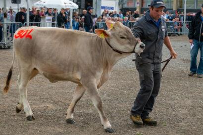 Stierenmarkt 2019-534-UHD
