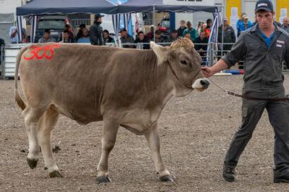 Stierenmarkt 2019-536-UHD