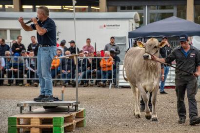 Stierenmarkt 2019-546-UHD