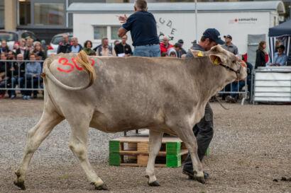 Stierenmarkt 2019-553-UHD