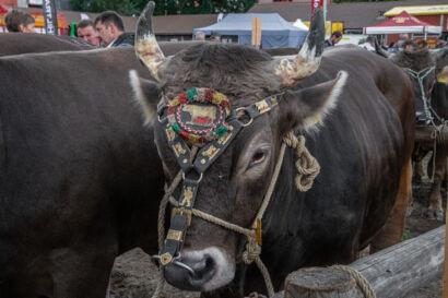 Stierenmarkt 2019-561-UHD