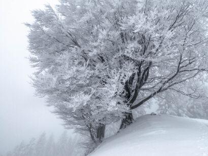 Winterimpressionen Jan 2018-177