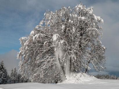 Wintervariationen Zug 2020