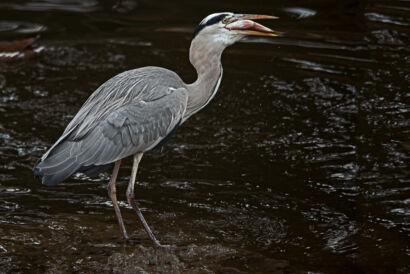 wpid659-komische-Vögel-Tierpark-Vogel26