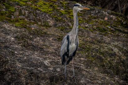 wpid667-komische-Vögel-Tierpark-Vogel30