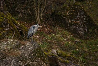 wpid669-komische-Vögel-Tierpark-Vogel31