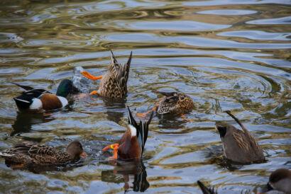 wpid683-komische-Vögel-Tierpark-Vogel38