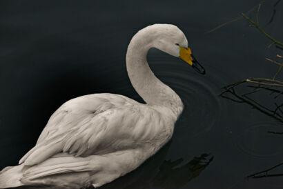 wpid689-komische-Vögel-Tierpark-Vogel41