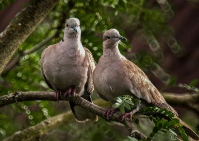 wpid695-komische-Vögel-Vogel44