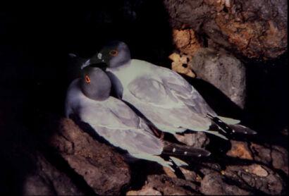 wpid697-komische-Vögel-Vogel45